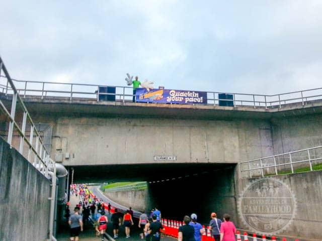 Running under water bridge during 2014 Walt Disney World Half Marathon