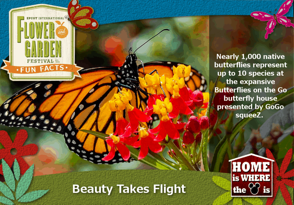 Epcot Flower & Garden Festival Fun Fact Butterflies