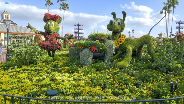 Minnie and Pluto Topiary at the Epcot International Flower & Garden Festival