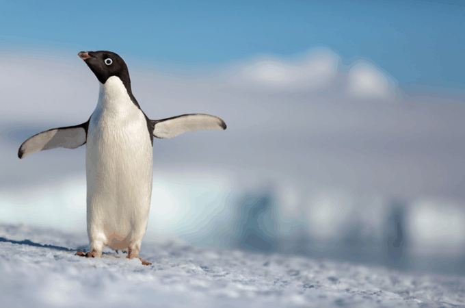 Disneynature Penguins Steve