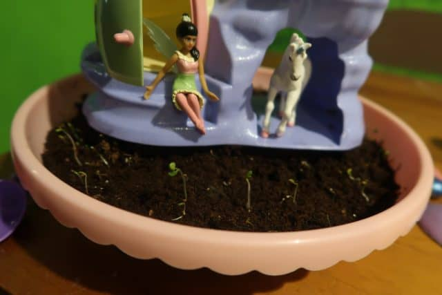 Our My Fairy Garden starting to sprout after a few days