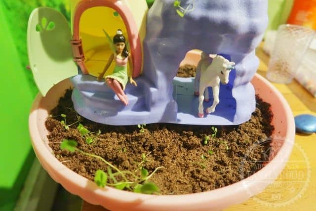 my fairy garden after 5 weeks and mold removed