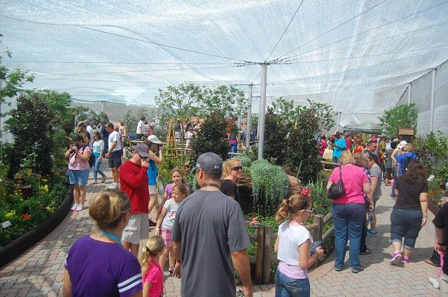 Guests visit the butterfly pavilion at Epcot International Flower and Garden Festival