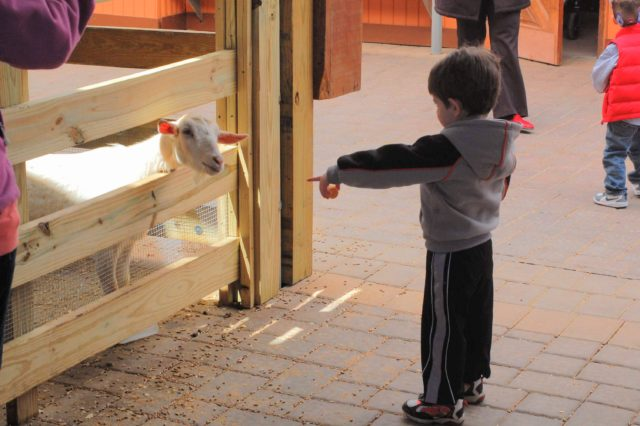 young boy points to a goat at a farm