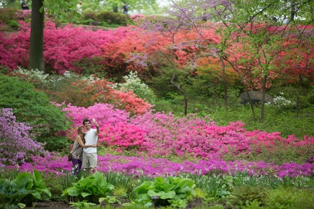 Couple taking selfie in the Azalea garden during Spring at the New York Botanical Garden