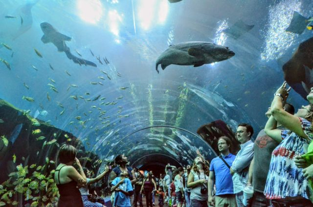 Guests inside an aquarium tunnel