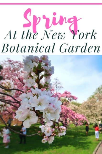 Spring At The New York Botanical Garden Adventures In Familyhood
