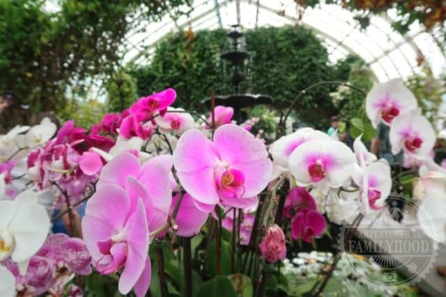pink, purple and white orchids in front of a fountain inside the conservatory at New York Botanical Garden's annual orchid show