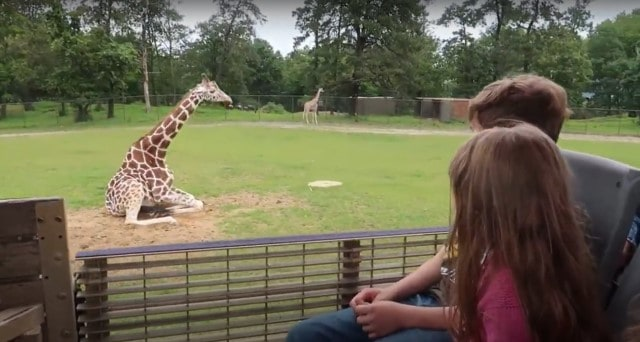 kids look at giraffe during safari at six flags great adventure