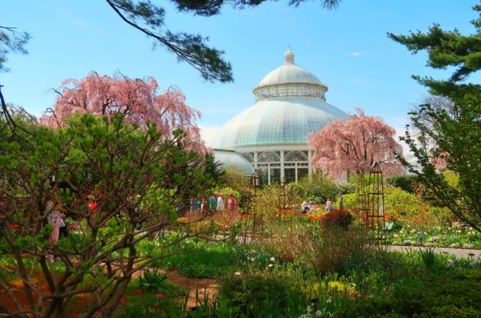 Spring colors in front of the conservatory at the New York Botanical Garden