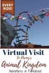 virtual visit to Disney's Animal Kingdom pin