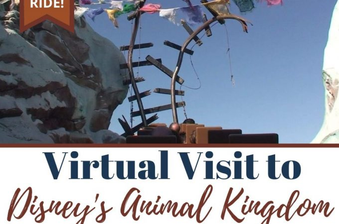 virtual visit to Disney's Animal Kingdom